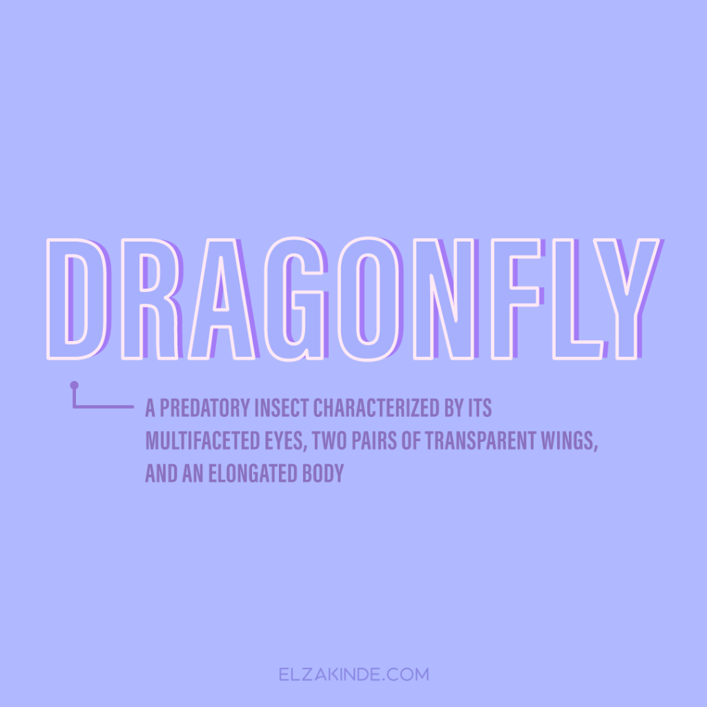 Dragonfly: a predatory insect characterized by its multifaceted eyes, two pairs of transparent wings, and an elongated body